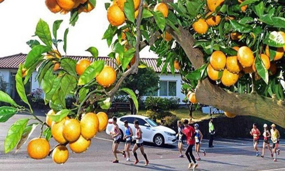 2019济州柑橘国际马拉松