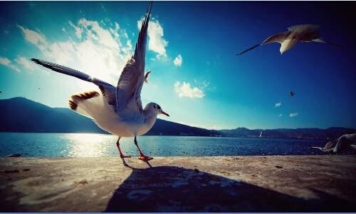 跃动海埂 环抱滇池 - 华为环滇池健康跑