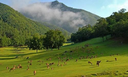 2015伊春国际森林马拉松赛
