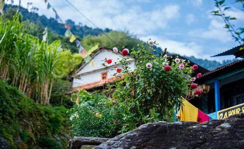 布恩山小环线,越艰辛越美丽,相遇高山杜鹃花