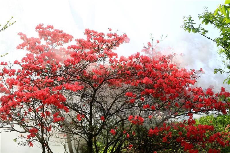 春 雾里看花.jpg